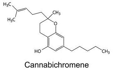 Cannabis Information – Bluepoint Wellness CT